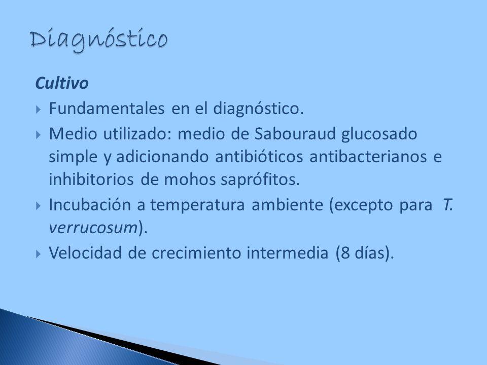 Cultivo Fundamentales en el diagnóstico. Medio utilizado: medio de Sabouraud glucosado simple y adicionando antibióticos antibacterianos e inhibitorio