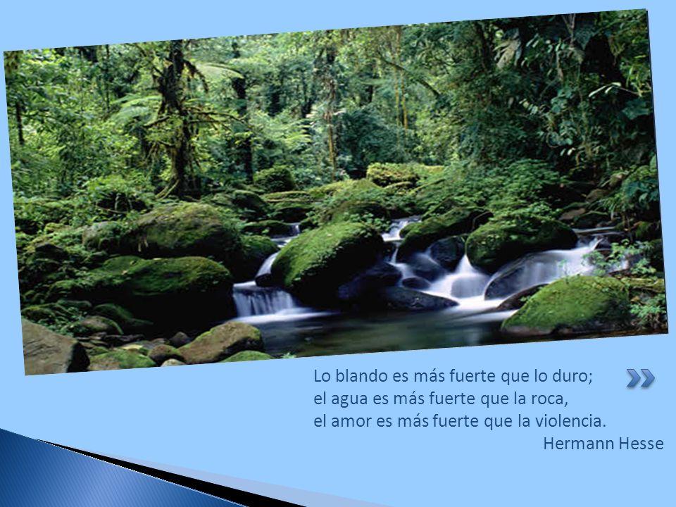 Lo blando es más fuerte que lo duro; el agua es más fuerte que la roca, el amor es más fuerte que la violencia. Hermann Hesse