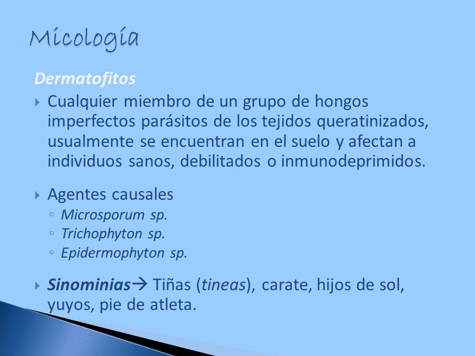 Dermatofitos Cualquier miembro de un grupo de hongos imperfectos parásitos de los tejidos queratinizados, usualmente se encuentran en el suelo y afect