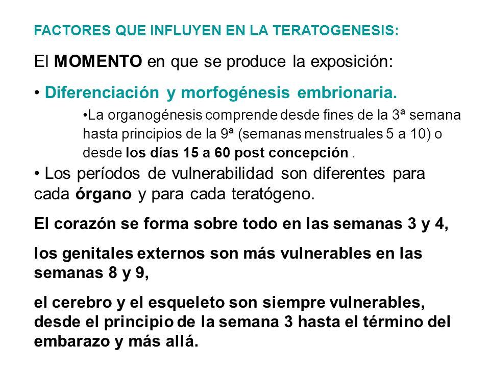 FACTORES QUE INFLUYEN EN LA TERATOGENESIS: El MOMENTO en que se produce la exposición: Diferenciación y morfogénesis embrionaria.