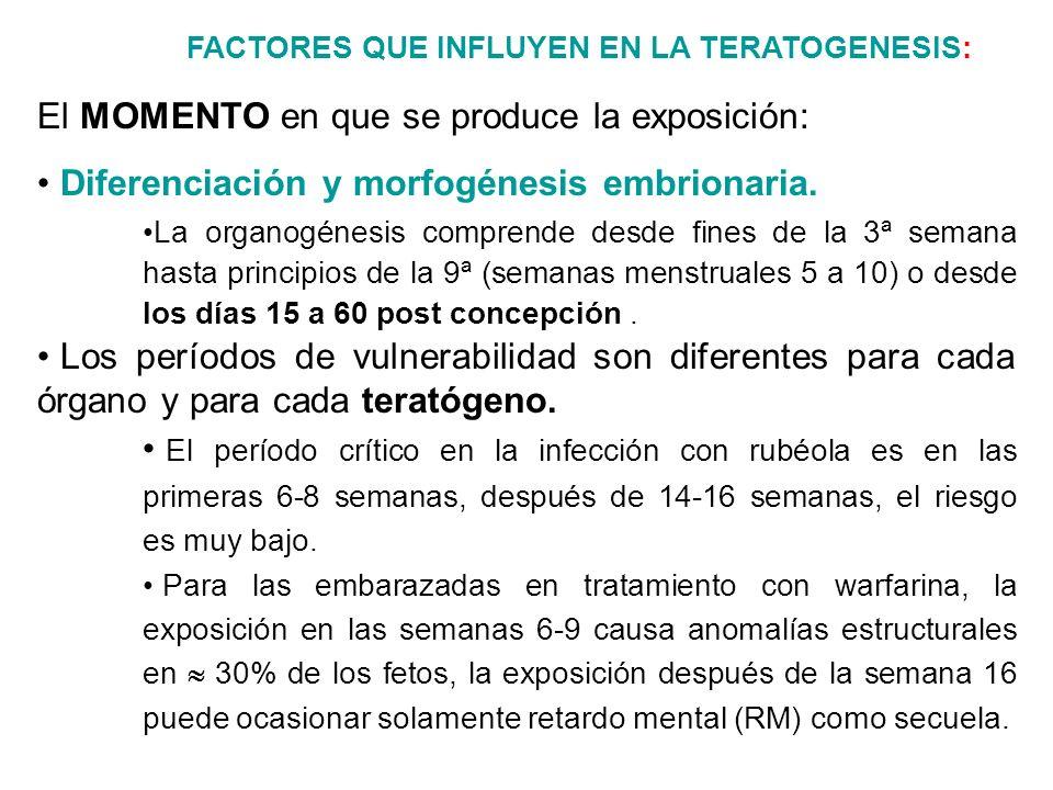 FACTORES QUE INFLUYEN EN LA TERATOGENESIS: El MOMENTO en que se produce la exposición: Diferenciación y morfogénesis embrionaria. La organogénesis com
