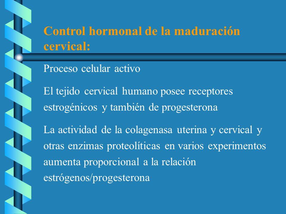 Control hormonal de la maduración cervical: Proceso celular activo El tejido cervical humano posee receptores estrogénicos y también de progesterona L
