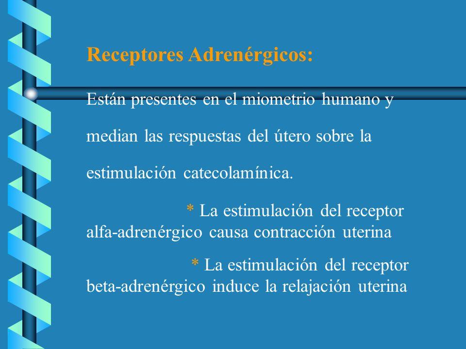 Receptores Adrenérgicos: Están presentes en el miometrio humano y median las respuestas del útero sobre la estimulación catecolamínica. * La estimulac