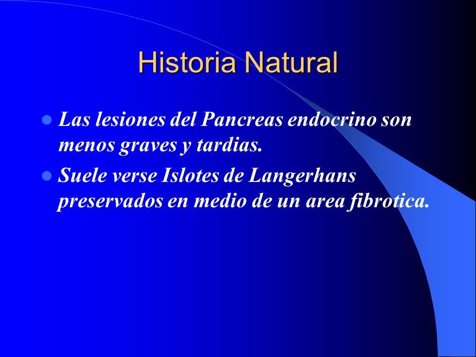Historia Natural Las lesiones del Pancreas endocrino son menos graves y tardias. Suele verse Islotes de Langerhans preservados en medio de un area fib