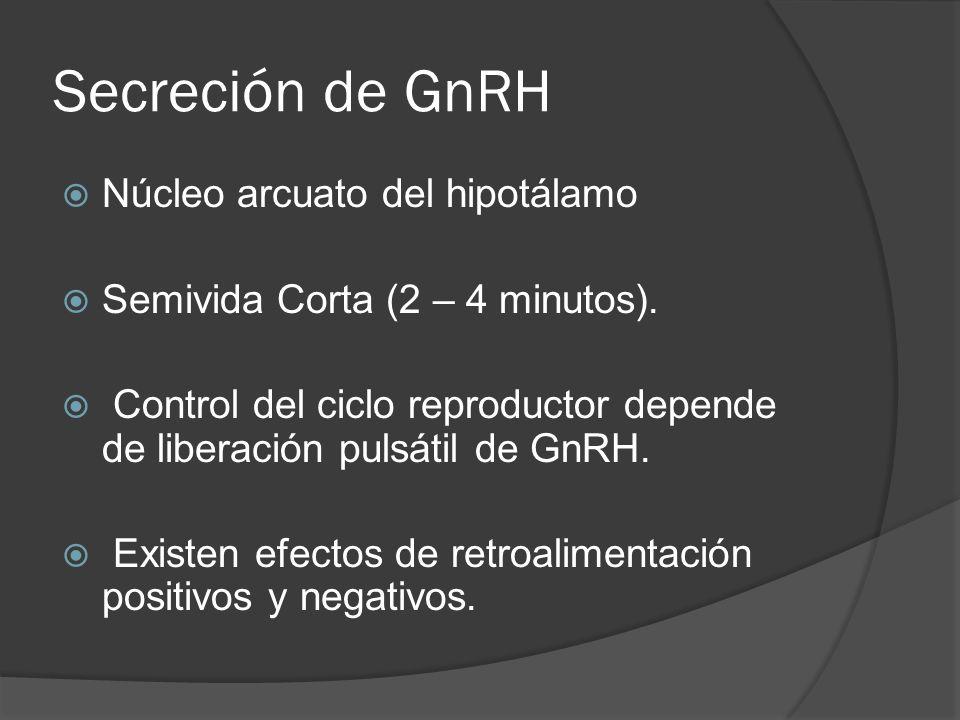 Secreción de GnRH Núcleo arcuato del hipotálamo Semivida Corta (2 – 4 minutos). Control del ciclo reproductor depende de liberación pulsátil de GnRH.
