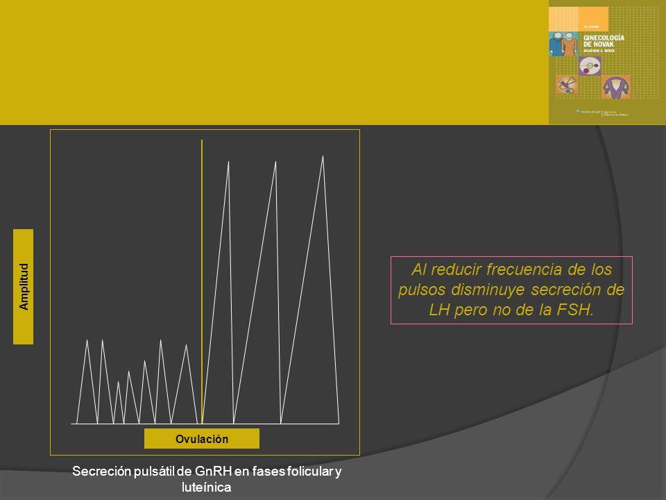Ovulación Amplitud Secreción pulsátil de GnRH en fases folicular y luteínica Al reducir frecuencia de los pulsos disminuye secreción de LH pero no de