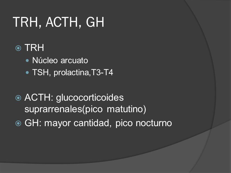 TRH, ACTH, GH TRH Núcleo arcuato TSH, prolactina,T3-T4 ACTH: glucocorticoides suprarrenales(pico matutino) GH: mayor cantidad, pico nocturno