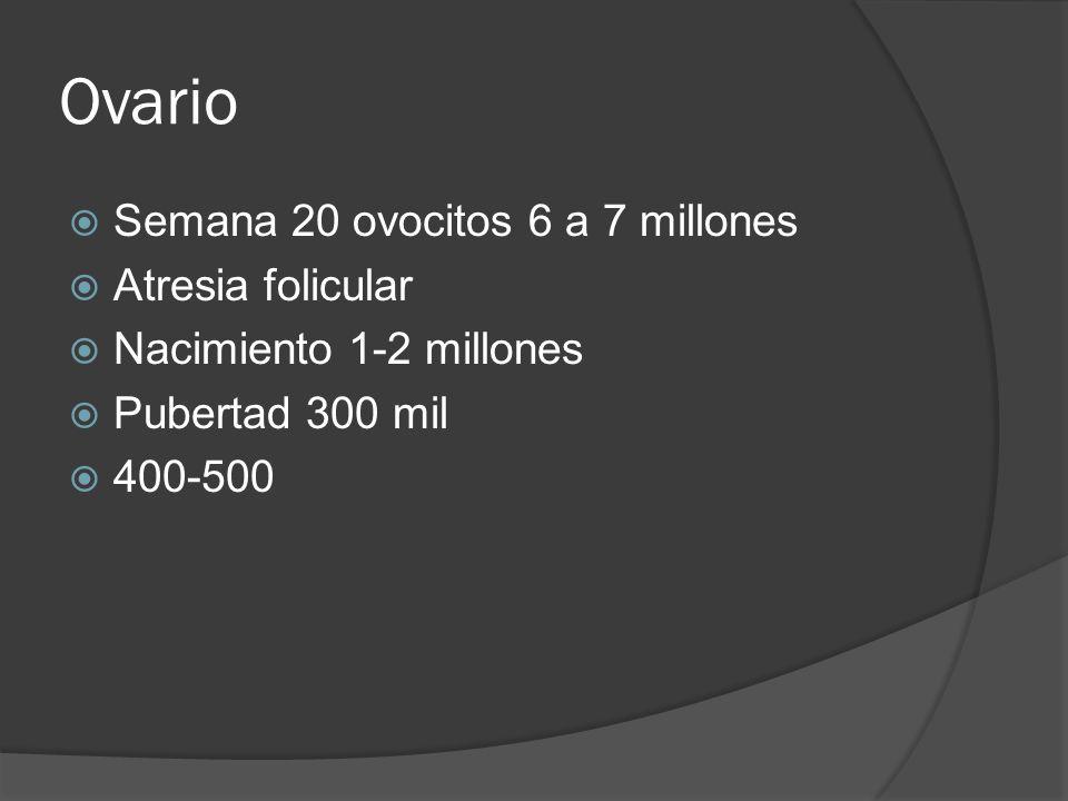 Ovario Semana 20 ovocitos 6 a 7 millones Atresia folicular Nacimiento 1-2 millones Pubertad 300 mil 400-500