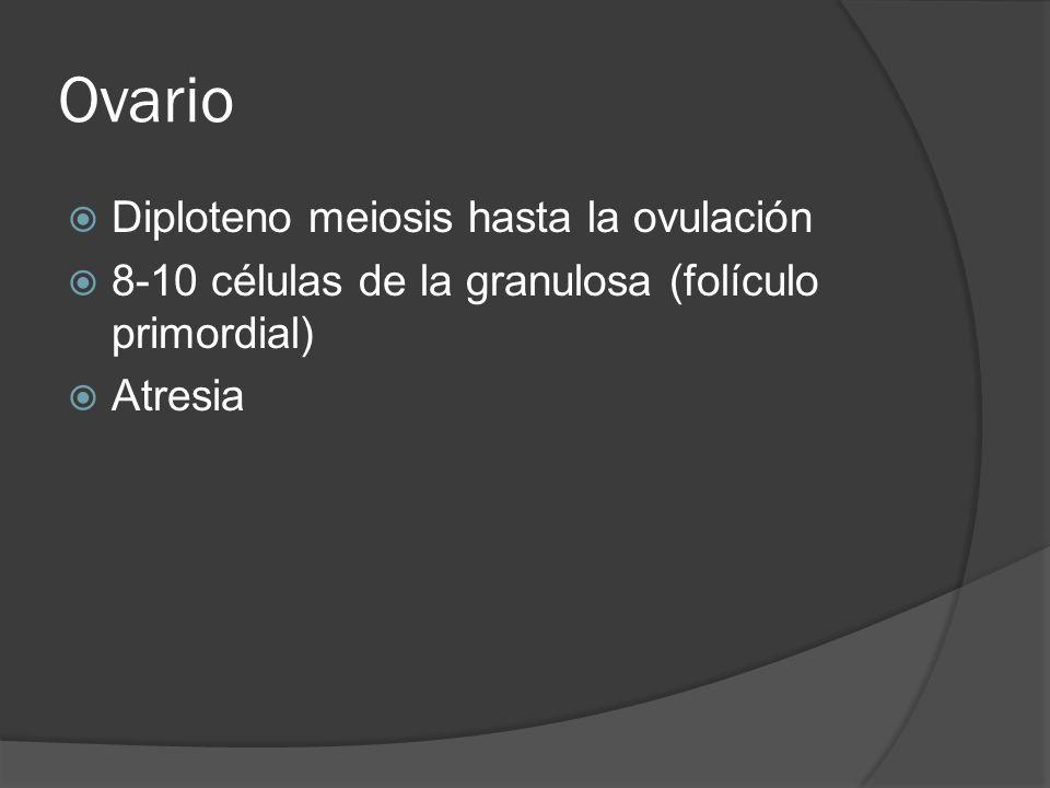 Ovario Diploteno meiosis hasta la ovulación 8-10 células de la granulosa (folículo primordial) Atresia