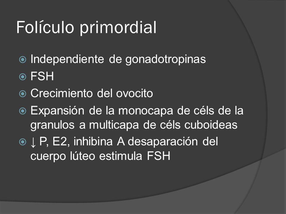 Folículo primordial Independiente de gonadotropinas FSH Crecimiento del ovocito Expansión de la monocapa de céls de la granulos a multicapa de céls cu