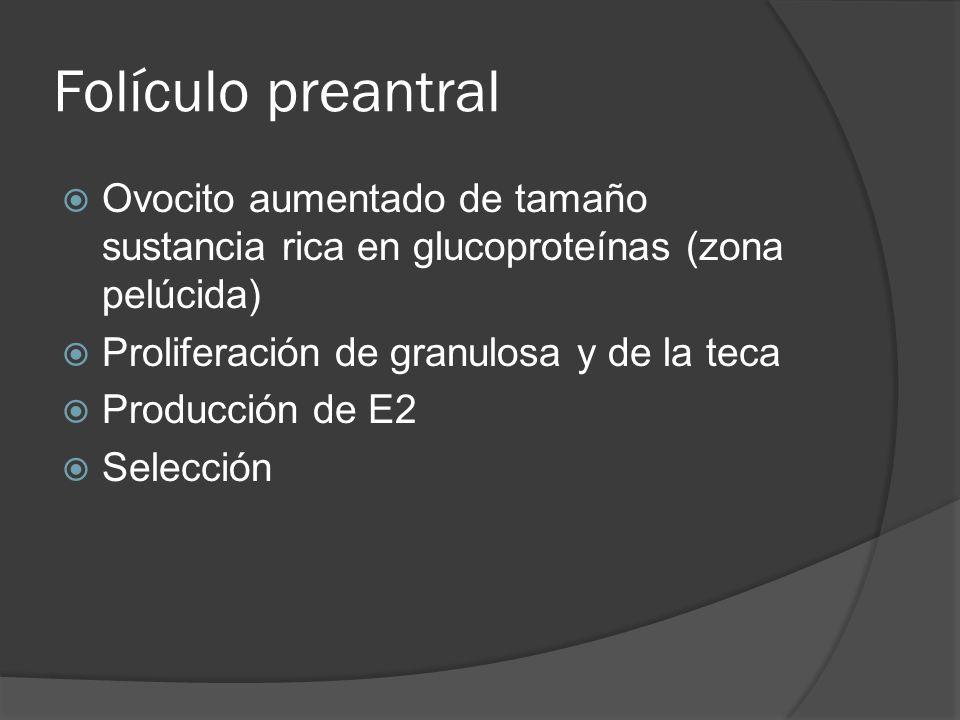 Folículo preantral Ovocito aumentado de tamaño sustancia rica en glucoproteínas (zona pelúcida) Proliferación de granulosa y de la teca Producción de