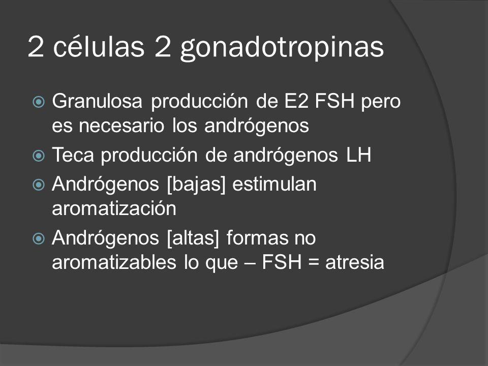 2 células 2 gonadotropinas Granulosa producción de E2 FSH pero es necesario los andrógenos Teca producción de andrógenos LH Andrógenos [bajas] estimul