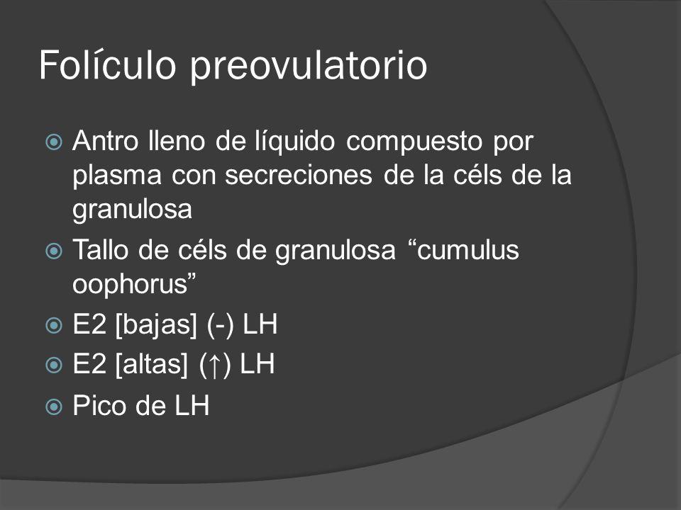 Folículo preovulatorio Antro lleno de líquido compuesto por plasma con secreciones de la céls de la granulosa Tallo de céls de granulosa cumulus oopho