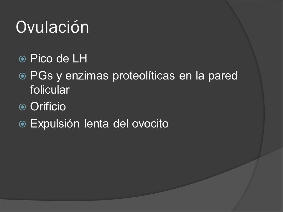 Ovulación Pico de LH PGs y enzimas proteolíticas en la pared folicular Orificio Expulsión lenta del ovocito