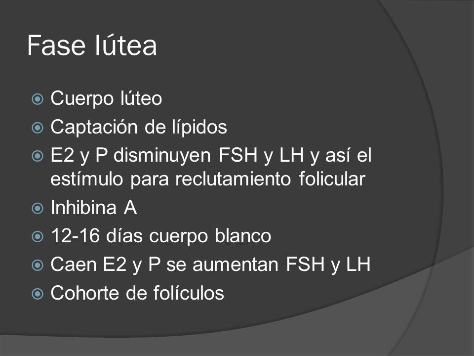 Fase lútea Cuerpo lúteo Captación de lípidos E2 y P disminuyen FSH y LH y así el estímulo para reclutamiento folicular Inhibina A 12-16 días cuerpo bl