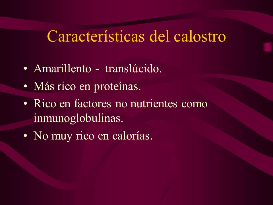Características del calostro Amarillento - translúcido. Más rico en proteínas. Rico en factores no nutrientes como inmunoglobulinas. No muy rico en ca