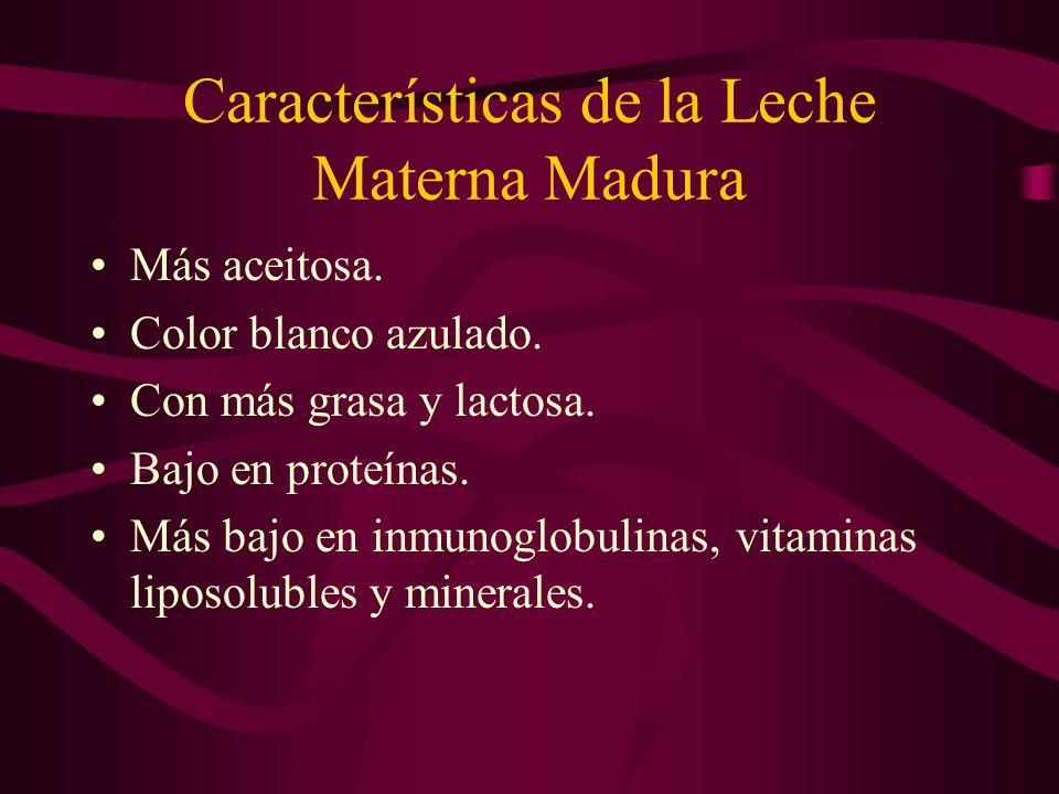 Características de la Leche Materna Madura Más aceitosa. Color blanco azulado. Con más grasa y lactosa. Bajo en proteínas. Más bajo en inmunoglobulina