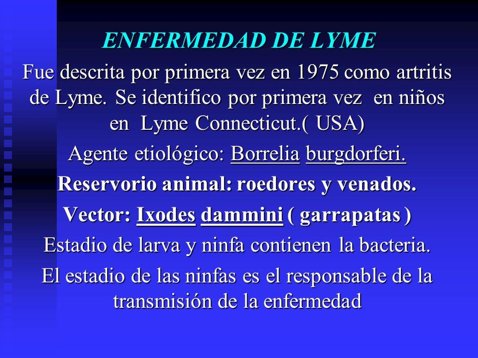 ENFERMEDAD DE LYME Fue descrita por primera vez en 1975 como artritis de Lyme. Se identifico por primera vez en niños en Lyme Connecticut.( USA) Agent