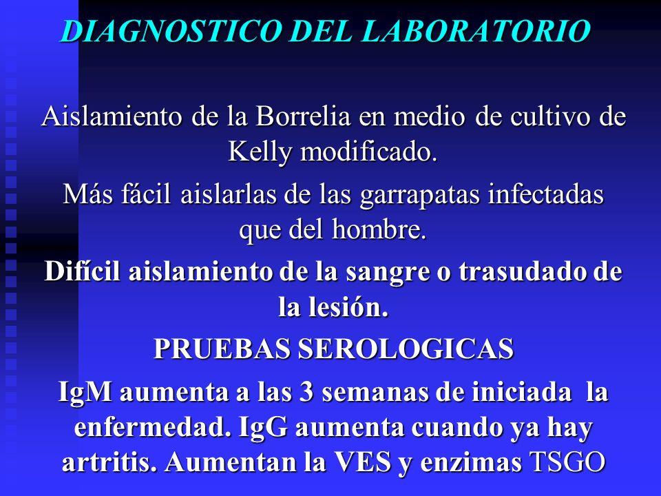 DIAGNOSTICODEL LABORATORIO DIAGNOSTICO DEL LABORATORIO Aislamiento de la Borrelia en medio de cultivo de Kelly modificado. Más fácil aislarlas de las