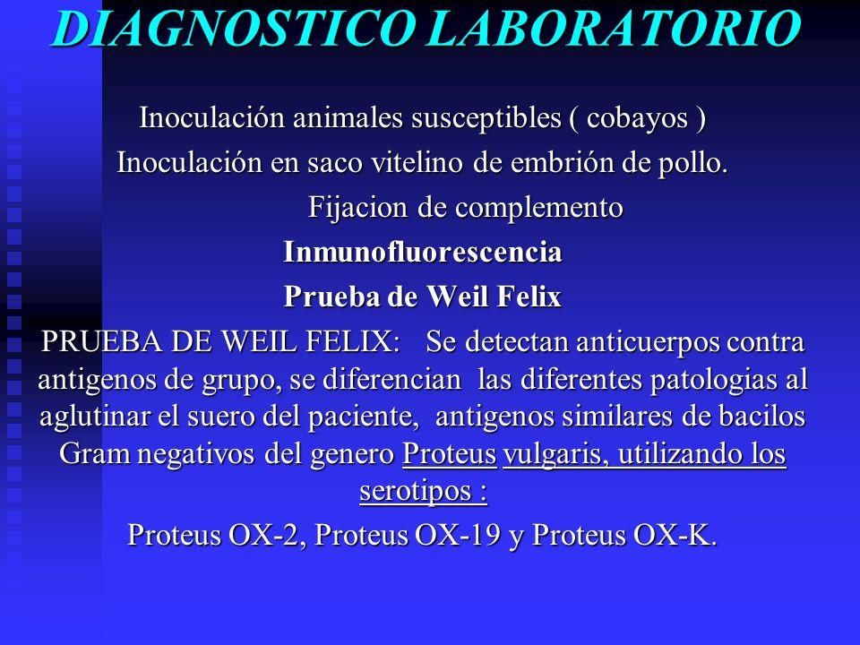 DIAGNOSTICO LABORATORIO Inoculación animales susceptibles ( cobayos ) Inoculación en saco vitelino de embrión de pollo. Fijacion de complemento Inmuno