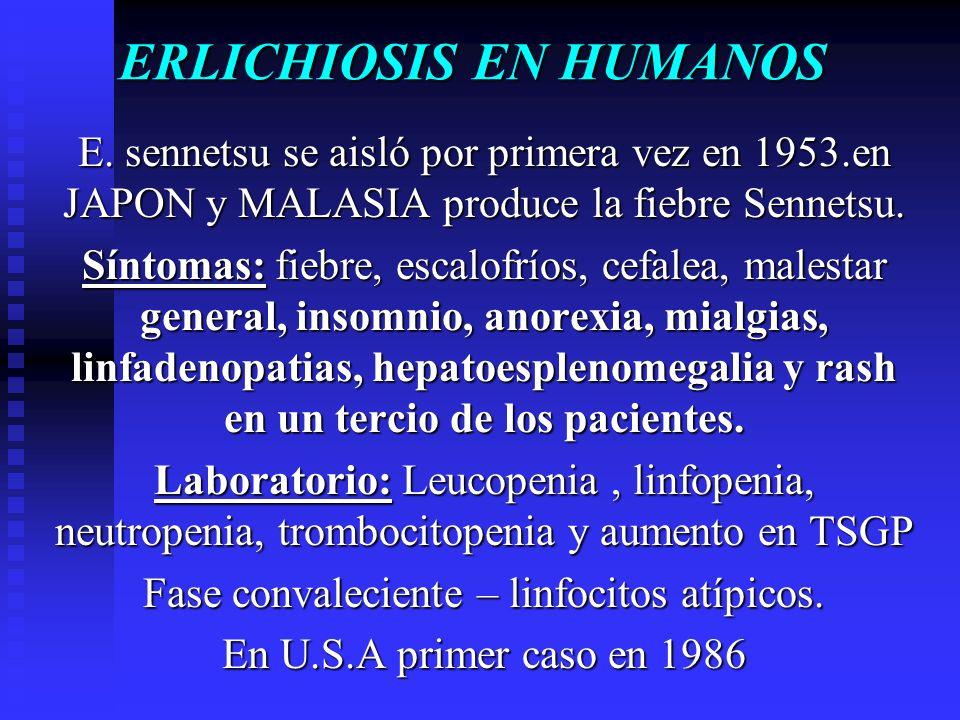 ERLICHIOSIS EN HUMANOS E. sennetsu se aisló por primera vez en 1953.en JAPON y MALASIA produce la fiebre Sennetsu. Síntomas: fiebre, escalofríos, cefa