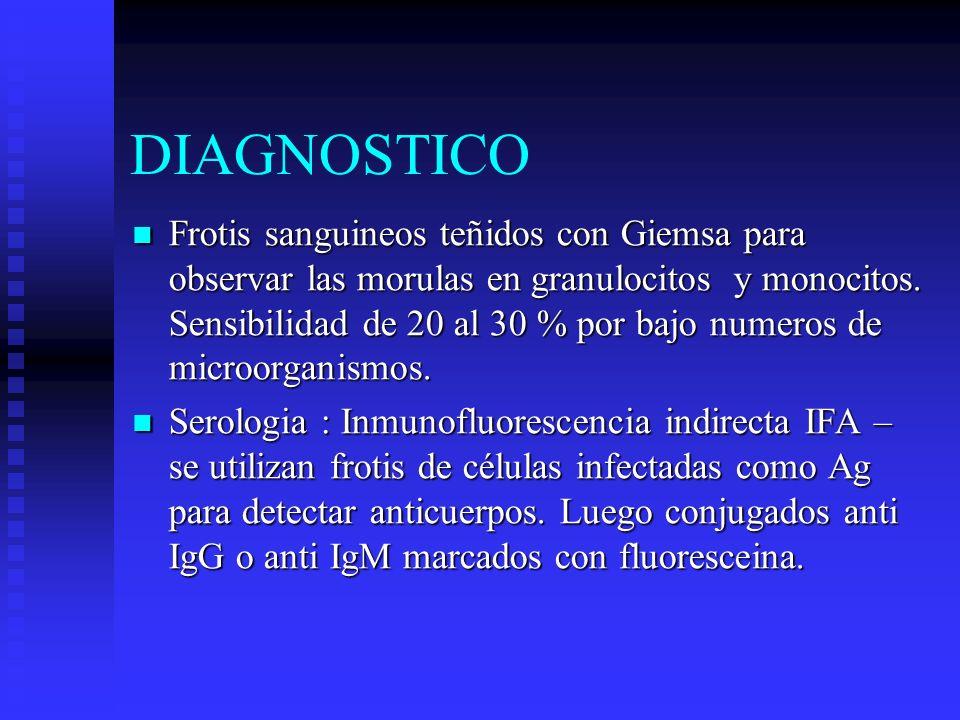 DIAGNOSTICO Frotis sanguineos teñidos con Giemsa para observar las morulas en granulocitos y monocitos. Sensibilidad de 20 al 30 % por bajo numeros de