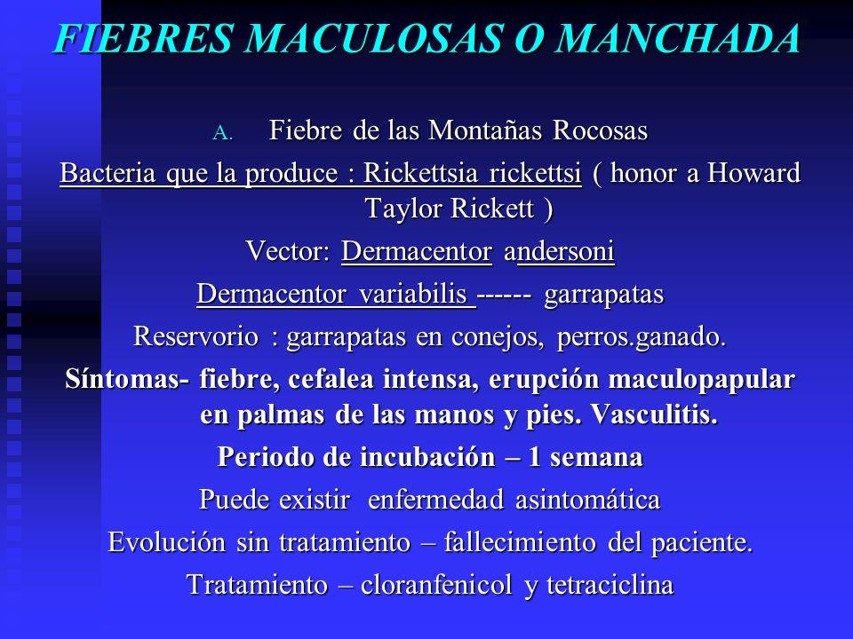 FIEBRES MACULOSAS O MANCHADA A. Fiebre de las Montañas Rocosas Bacteria que la produce : Rickettsia rickettsi ( honor a Howard Taylor Rickett ) Vector