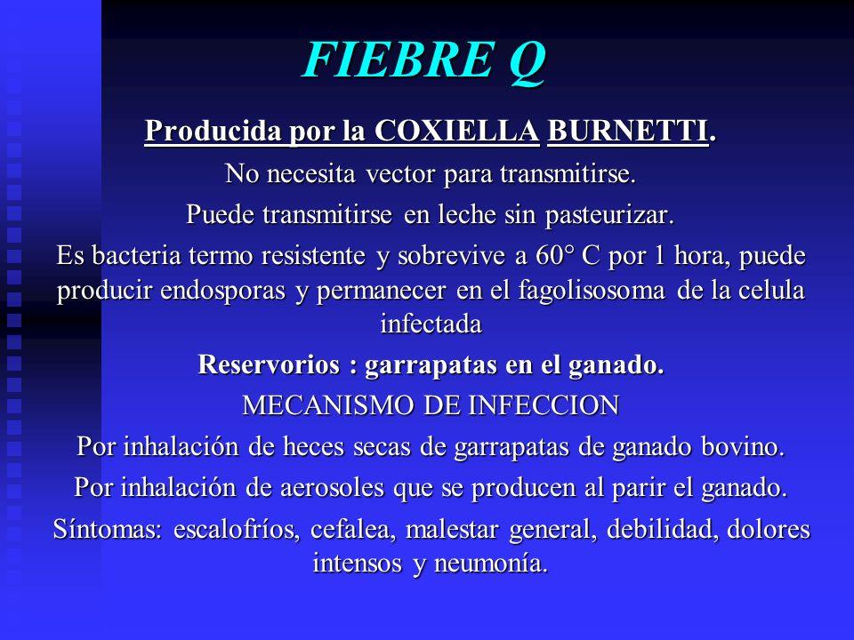 Erlichiosis en COSTA RICA Se han detectado 13 casos en pacientes infectados por mascotas principalmente veterinarios.