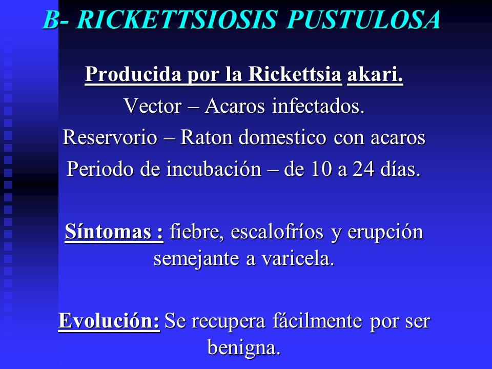 B- RICKETTSIOSIS PUSTULOSA Producida por la Rickettsia akari. Vector – Acaros infectados. Reservorio – Raton domestico con acaros Periodo de incubació