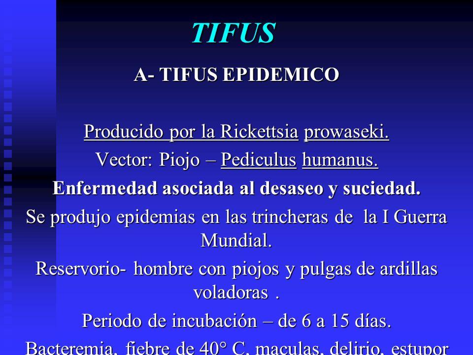 TIFUS A- TIFUS EPIDEMICO Producido por la Rickettsia prowaseki. Vector: Piojo – Pediculus humanus. Enfermedad asociada al desaseo y suciedad. Se produ