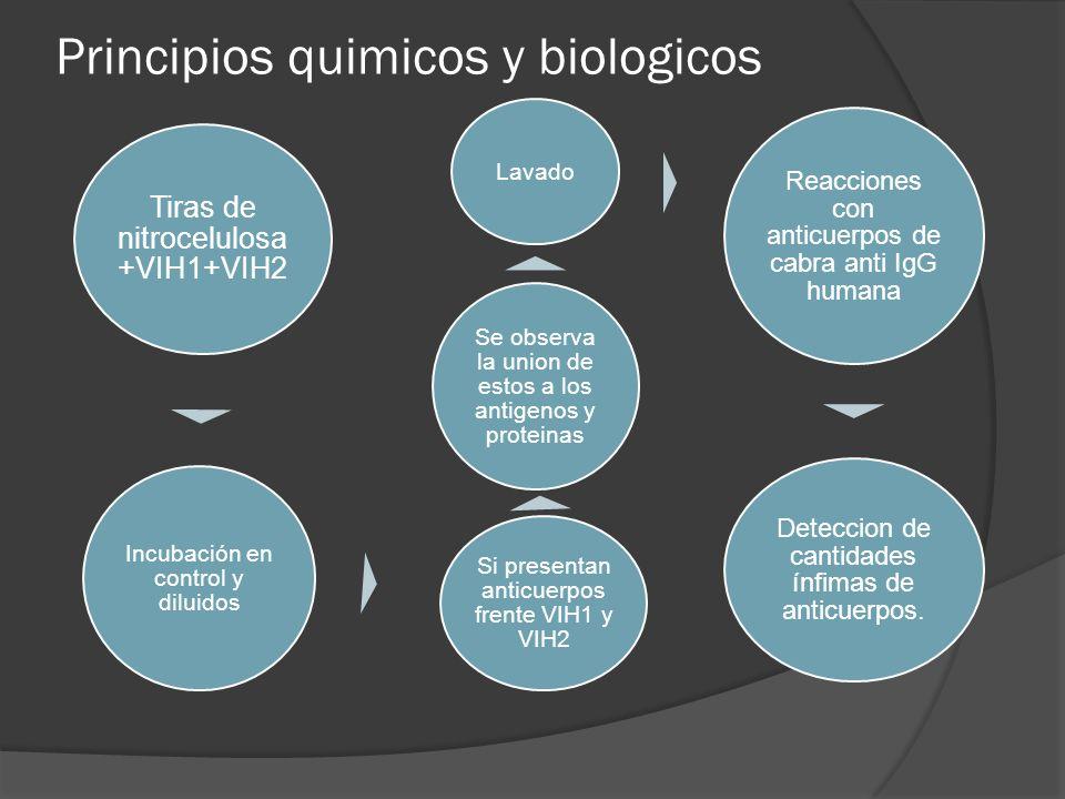 Principios quimicos y biologicos Tiras de nitrocelulosa +VIH1+VIH2 Incubación en control y diluidos Si presentan anticuerpos frente VIH1 y VIH2 Se obs