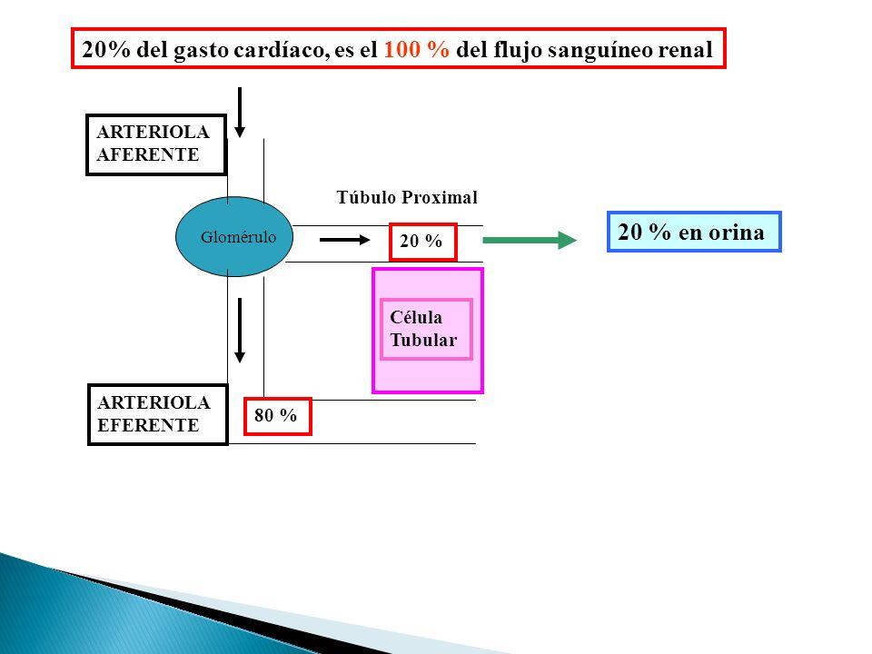 Glomérulo ARTERIOLA AFERENTE ARTERIOLA EFERENTE Túbulo Proximal Célula Tubular 20 % 80 % 20 % en orina 20% del gasto cardíaco, es el 100 % del flujo sanguíneo renal