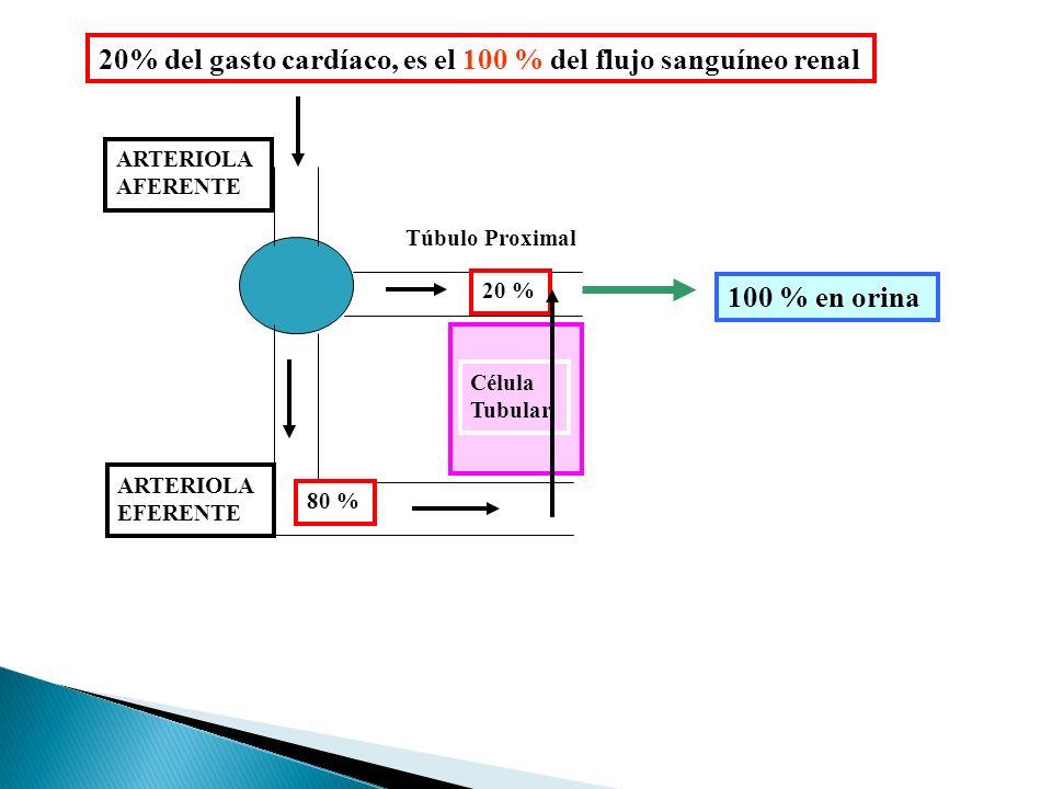 ARTERIOLA AFERENTE ARTERIOLA EFERENTE Túbulo Proximal Célula Tubular 20% del gasto cardíaco, es el 100 % del flujo sanguíneo renal 20 % 80 % 100 % en orina