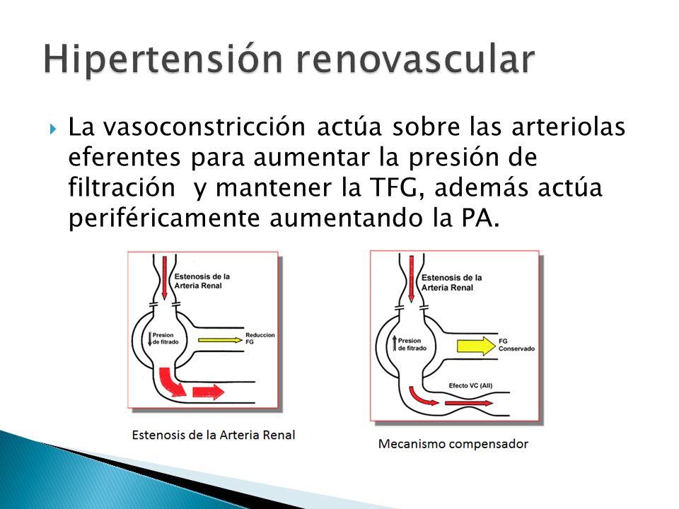 La vasoconstricción actúa sobre las arteriolas eferentes para aumentar la presión de filtración y mantener la TFG, además actúa periféricamente aumentando la PA.