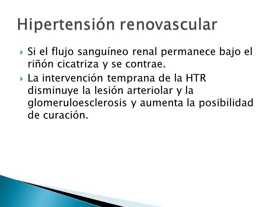 Si el flujo sanguíneo renal permanece bajo el riñón cicatriza y se contrae.