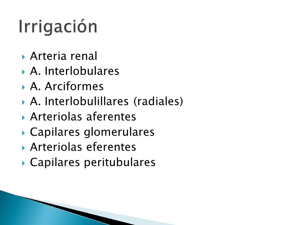 Arteria renal A.Interlobulares A. Arciformes A.