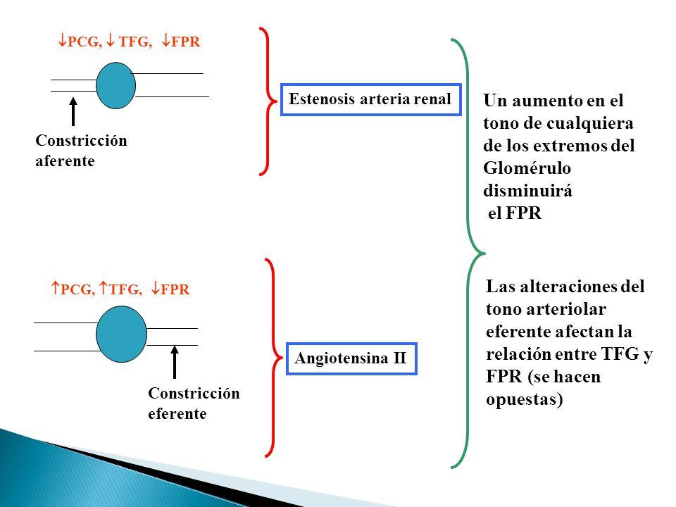 Constricción aferente PCG, TFG, FPR Constricción eferente PCG, TFG, FPR Estenosis arteria renal Angiotensina II Un aumento en el tono de cualquiera de los extremos del Glomérulo disminuirá el FPR Las alteraciones del tono arteriolar eferente afectan la relación entre TFG y FPR (se hacen opuestas)