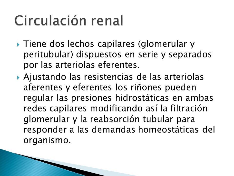 Tiene dos lechos capilares (glomerular y peritubular) dispuestos en serie y separados por las arteriolas eferentes.