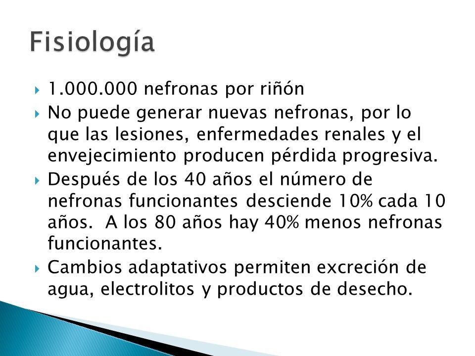 1.000.000 nefronas por riñón No puede generar nuevas nefronas, por lo que las lesiones, enfermedades renales y el envejecimiento producen pérdida progresiva.