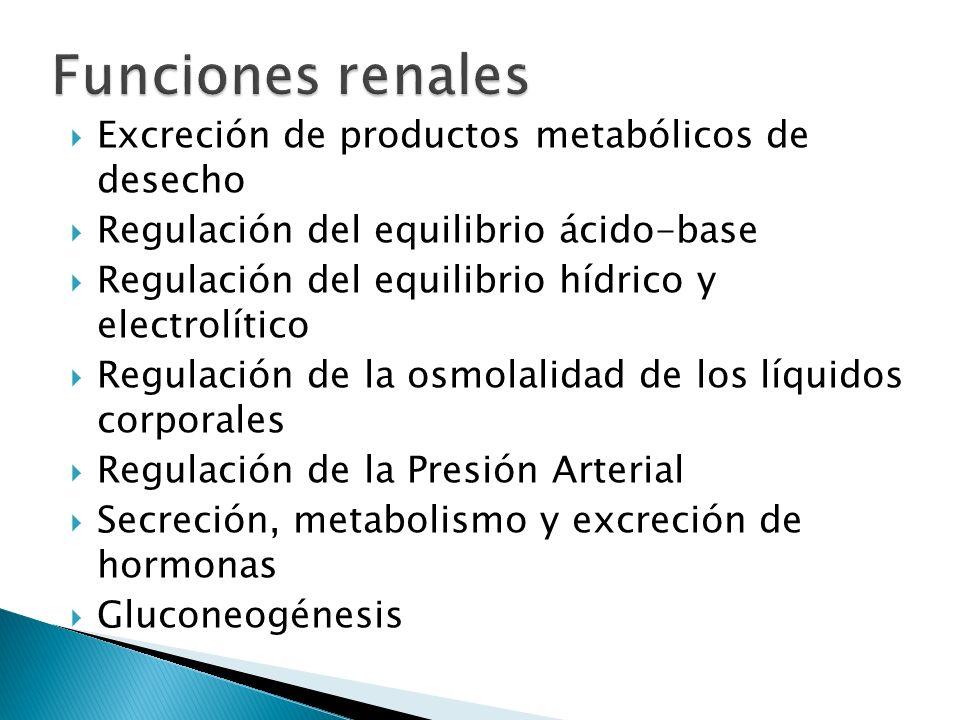 Excreción de productos metabólicos de desecho Regulación del equilibrio ácido-base Regulación del equilibrio hídrico y electrolítico Regulación de la osmolalidad de los líquidos corporales Regulación de la Presión Arterial Secreción, metabolismo y excreción de hormonas Gluconeogénesis