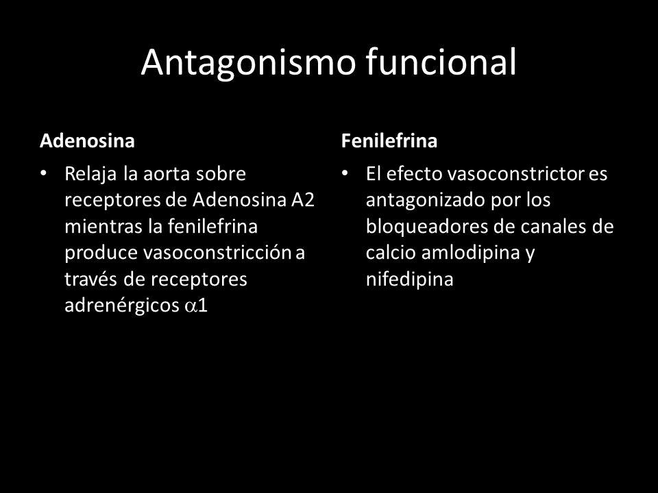 Antagonismo funcional Adenosina Relaja la aorta sobre receptores de Adenosina A2 mientras la fenilefrina produce vasoconstricción a través de receptor