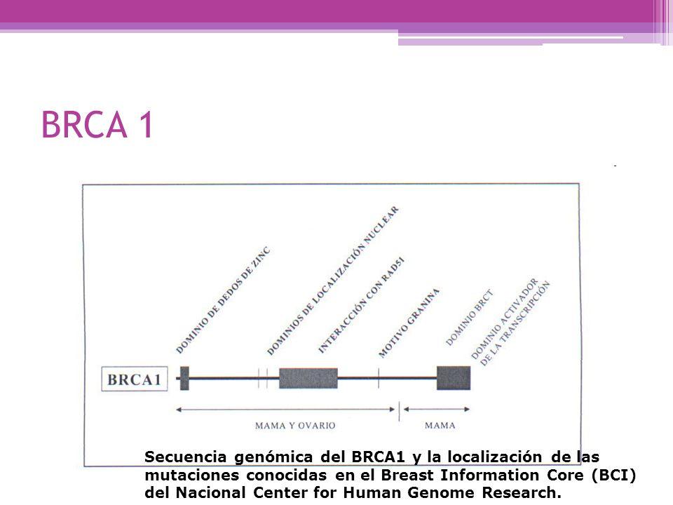 BRCA 1 Secuencia genómica del BRCA1 y la localización de las mutaciones conocidas en el Breast Information Core (BCI) del Nacional Center for Human Ge