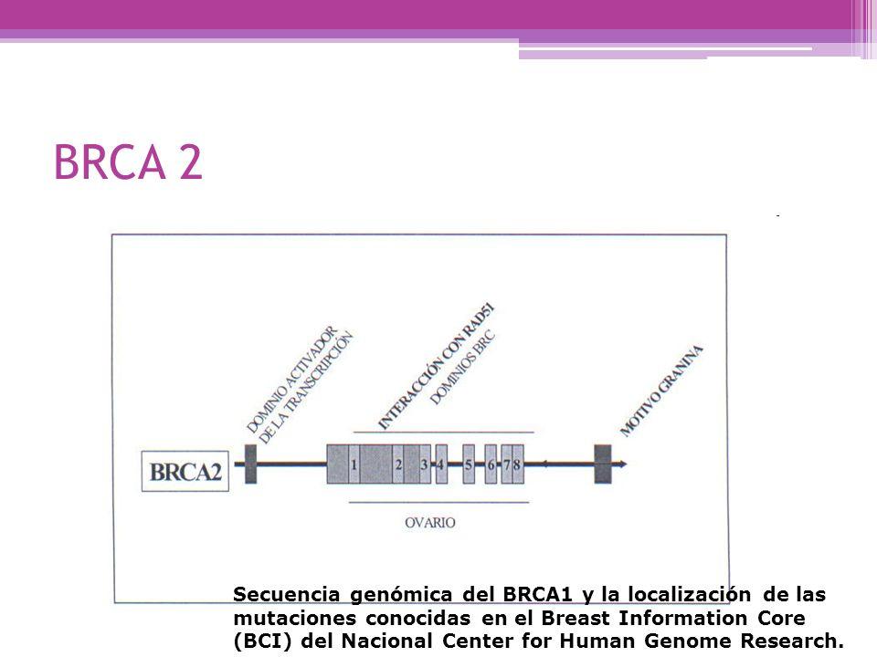 BRCA 2 Secuencia genómica del BRCA1 y la localización de las mutaciones conocidas en el Breast Information Core (BCI) del Nacional Center for Human Ge