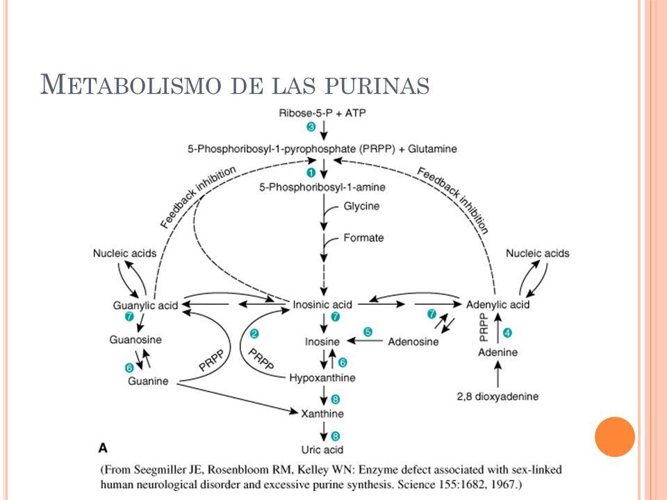 M ETABOLISMO DE LAS PURINAS