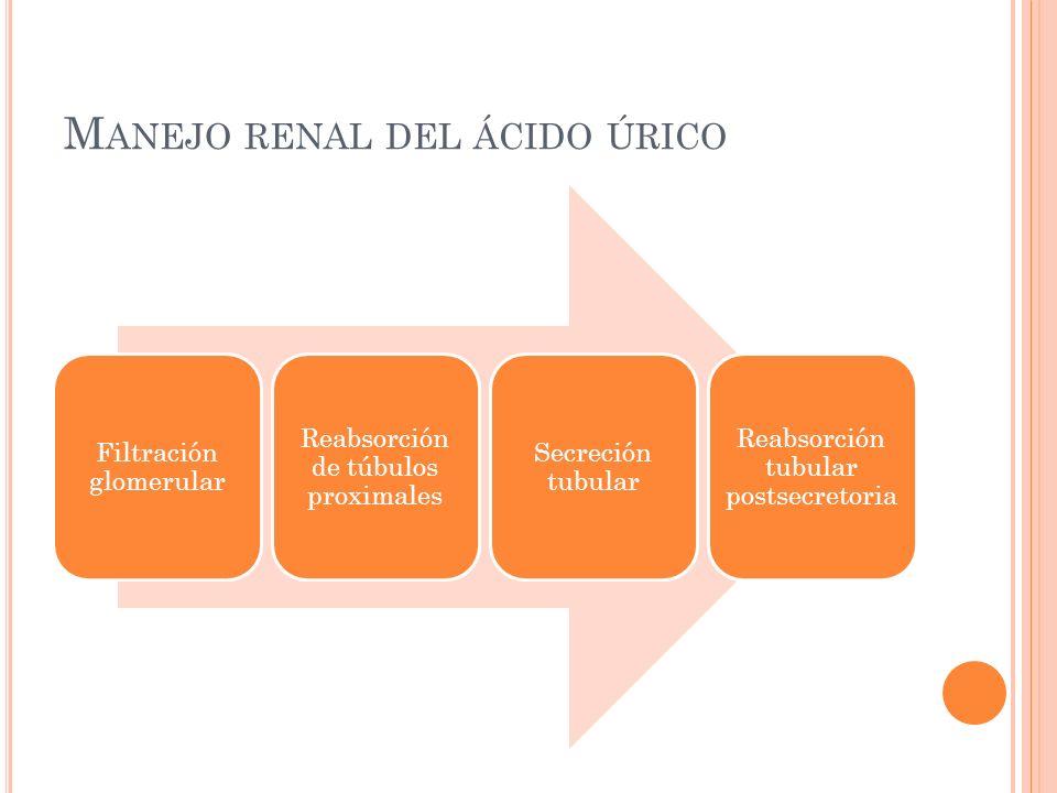 M ANEJO RENAL DEL ÁCIDO ÚRICO Filtración glomerular Reabsorción de túbulos proximales Secreción tubular Reabsorción tubular postsecretoria