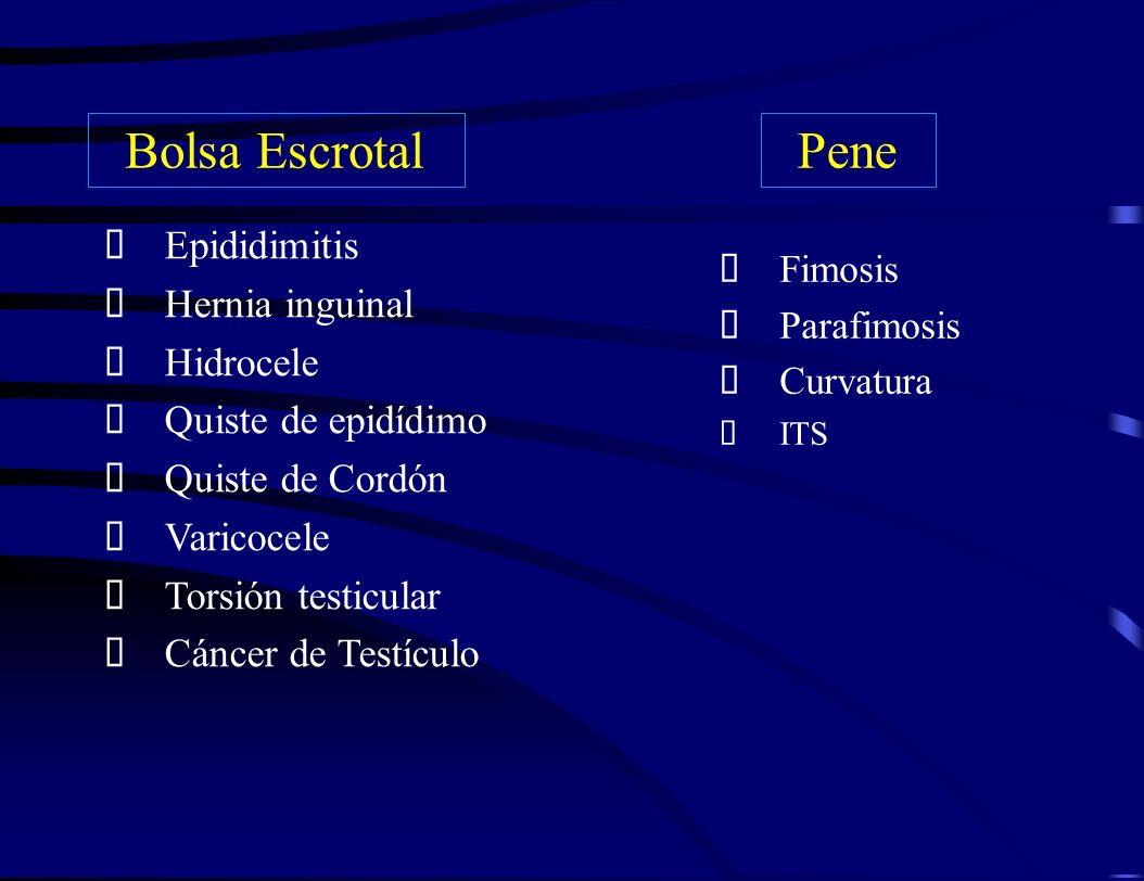 Epididimitis Hernia inguinal Hidrocele Quiste de epidídimo Quiste de Cordón Varicocele Torsión testicular Cáncer de Testículo Fimosis Parafimosis Curv