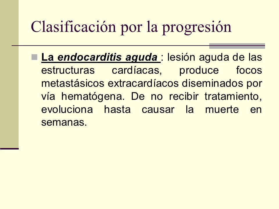 Clasificación por la progresión La endocarditis aguda La endocarditis aguda : lesión aguda de las estructuras cardíacas, produce focos metastásicos ex