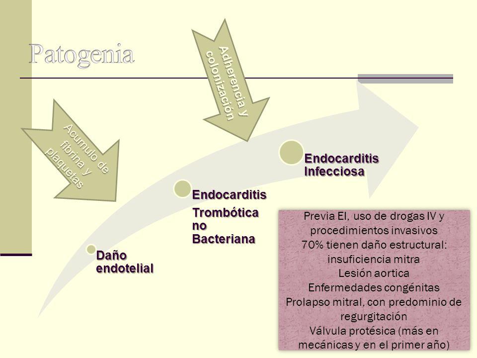 Daño endotelial Endocarditis Trombótica no Bacteriana Endocarditis Infecciosa Acumulo de fibrina y plaquetas Adherencia y colonización Previa EI, uso