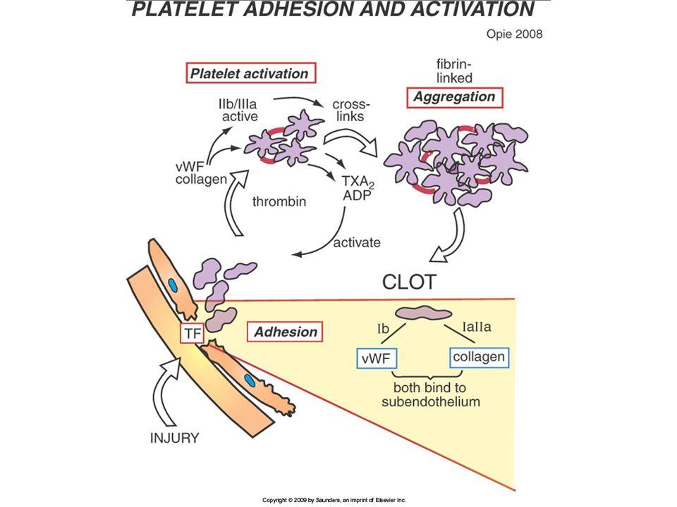Inhibidores de factor Xa Hay inhibidores directos e indirectos del factor Xa.