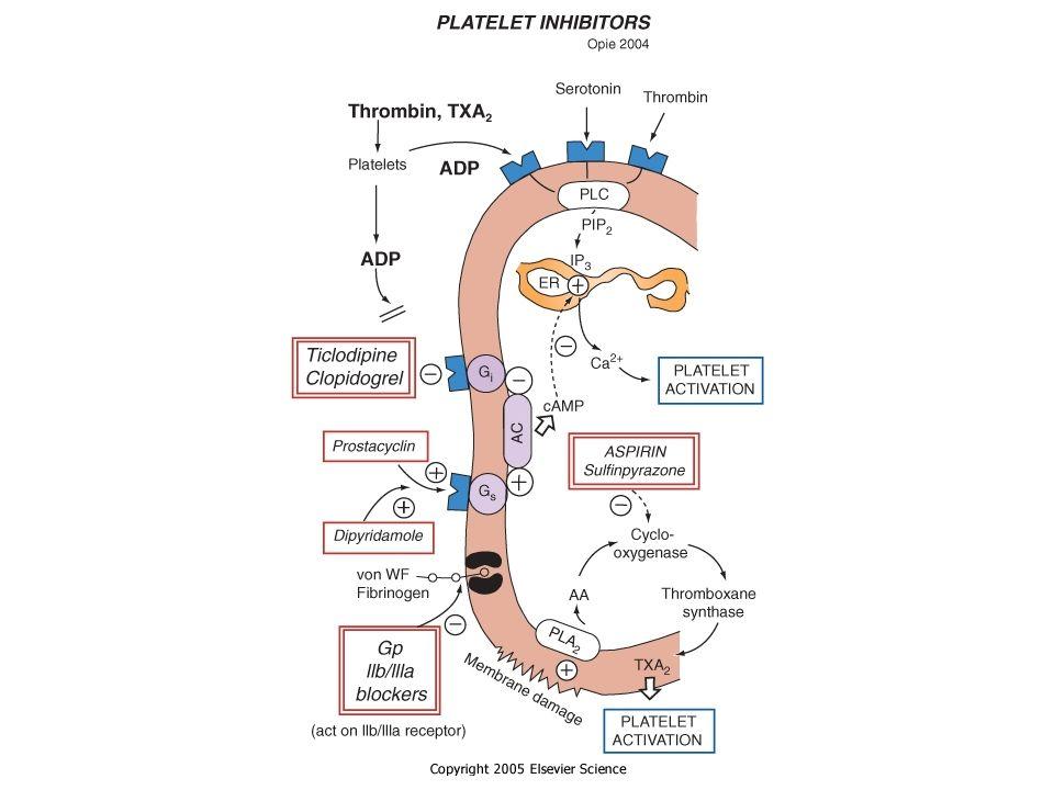 Clopidogrel No requiere ajuste por edad o función renal.